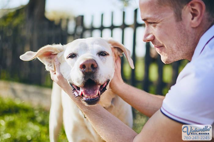 A Dog Bite Could Have Legal Ramifications