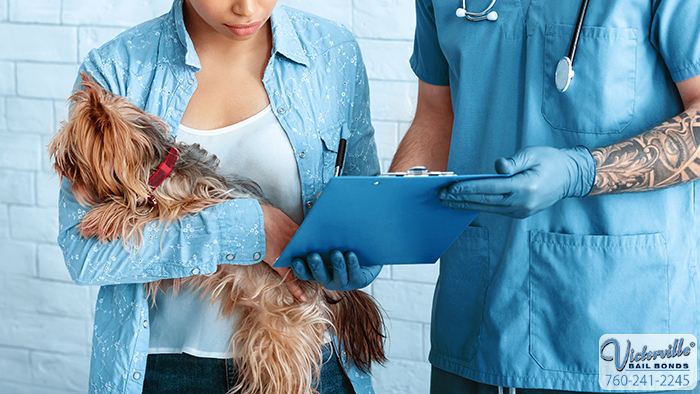 California's Spay Neuter Laws and How They Impact You